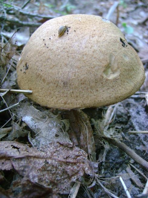 Mushroom...so what is it?