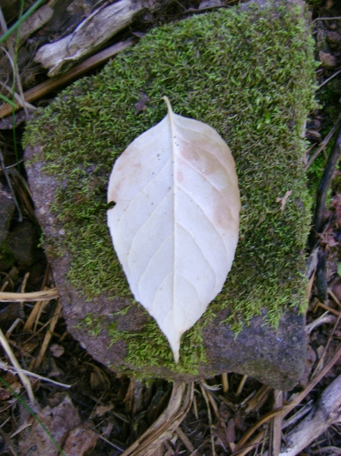 White leaf on green moss-covered rock