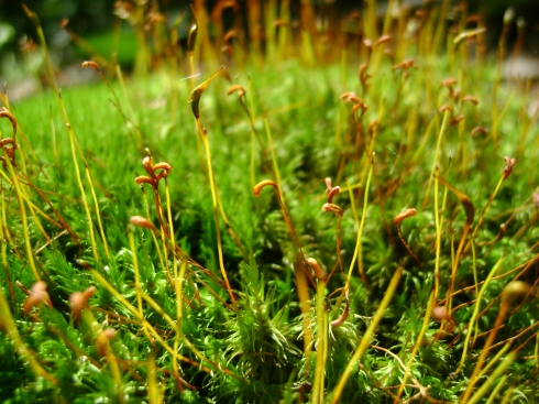 The surprise of red thread-like creatures growing up in moss