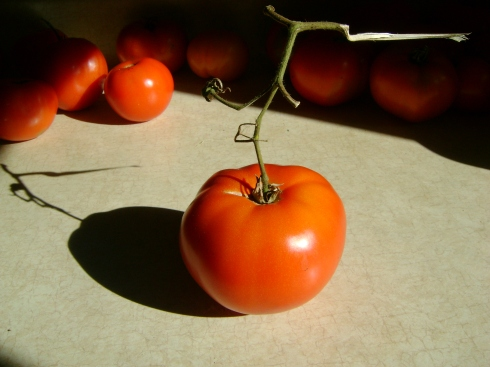 Tomato AND shadow