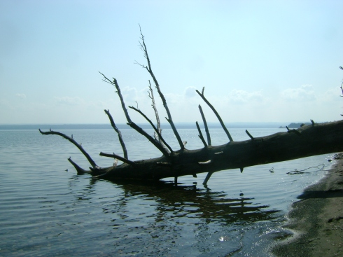 Fallen tree in Keweenaw Bay