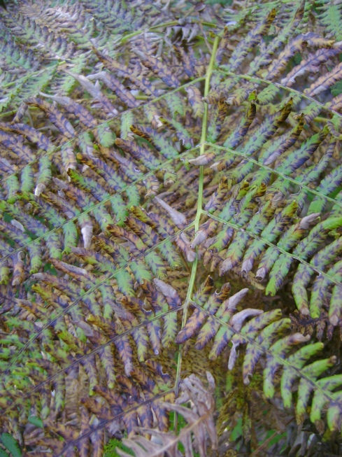 The Transformation of Ferns