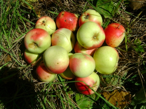 Apples for the visitors!