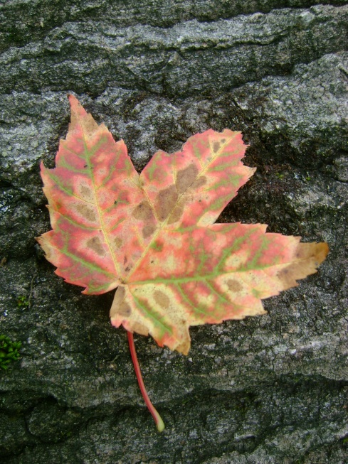 Leaf on bark