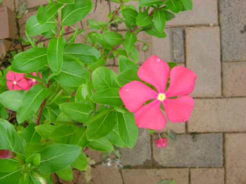 Pink flower over tile