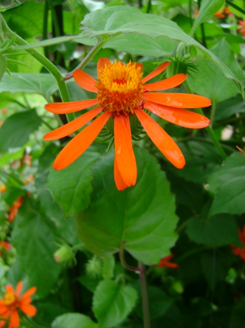 Splash of red/orange flower