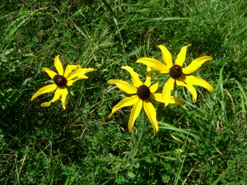It's possible to survive frost.  Ask the black-eyed Susans.
