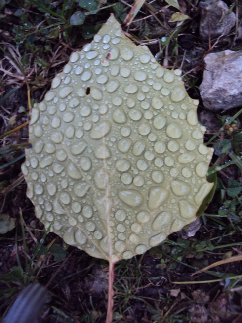 Exhibit C:  Upright Leaf with (you guessed it) droplets of rain