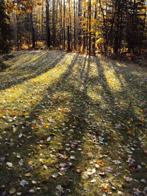 Long shadows at dawn when you rushed out in your pajamas w winter coat and boots