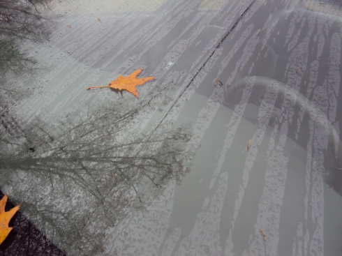 Wet reflections in wind shield with leaf