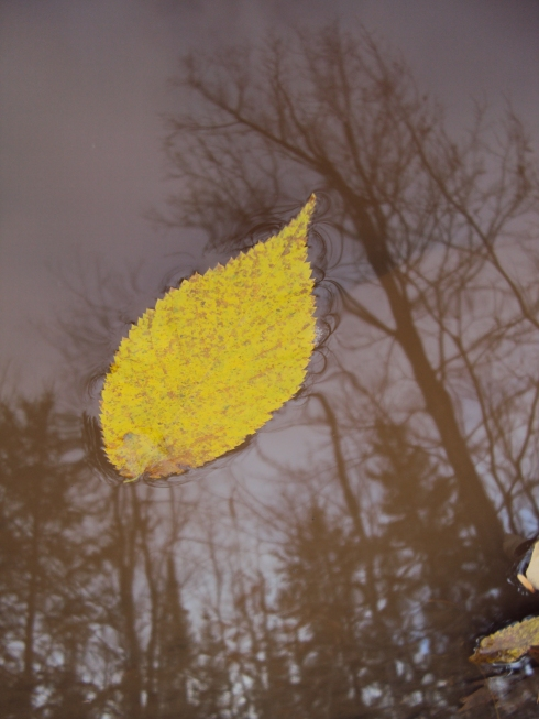 Yellow leaf in mud puddle reflections