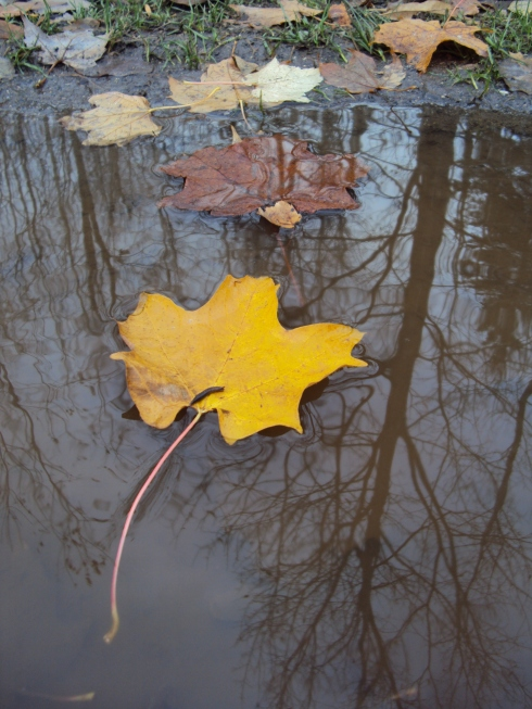 Floating on reflections