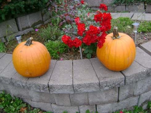 2 pumpkins and a rose