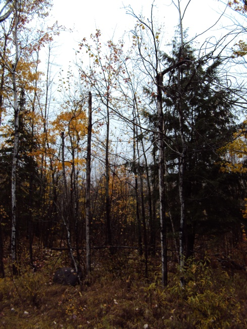 Looking more like autumn here in the woods
