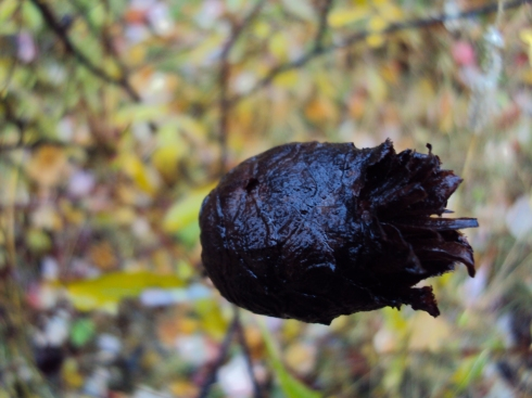 The blackest of cones (or some cone-like object on a low bush)