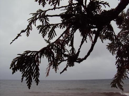 Cedar over water