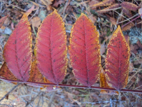 Four red leaves