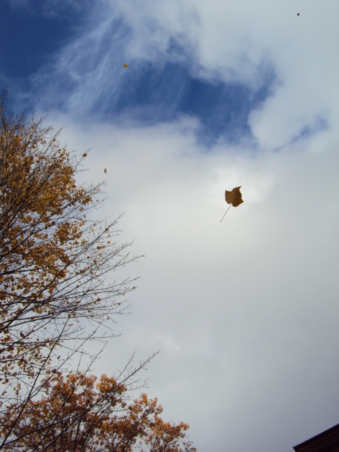 Leaf, cloud, blue sky