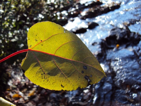 Yellow-green leaf dangles over river