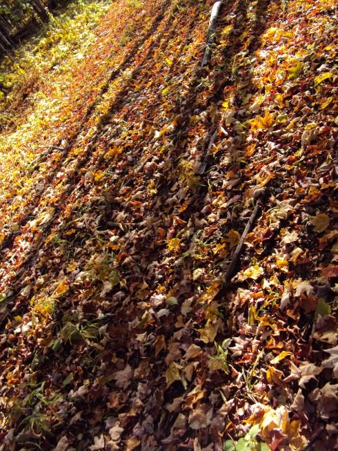 Shadows on fallen leaves