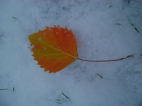 Autumn leaf on snow