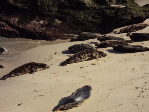 Seals!!